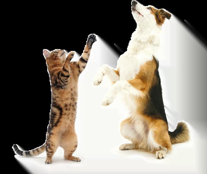 fatory-cat-dog-png_1_20161031_102357